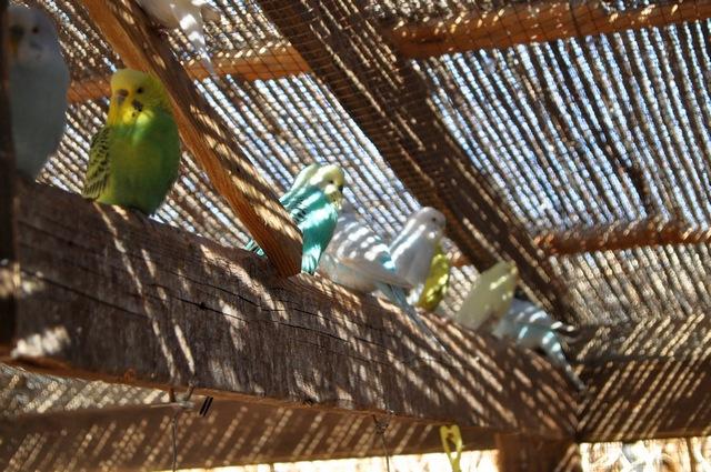 תוכונים בחצר של צימר קלם