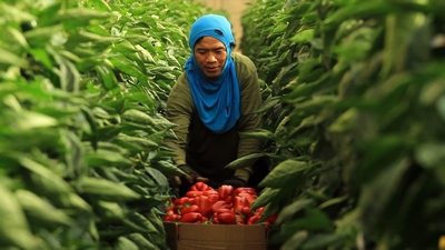 פלפל בשדה של יובל קלם  - עם עובד תאילנדי